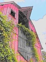 Vine-covered barn, Warsaw Bottoms.