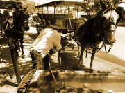 A carriage driver tends to his horse one morning along Jackson Square.