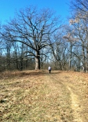 The single track trail winds up a hill at McNaughton Park in Pekin, Ill.