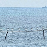 A line of seagulls rests on a perch near Abigail Caye, Belize, while another caye can be seen in the background. Abigail Caye is about 8 miles into the Caribbean Sea from Placencia, Belize.