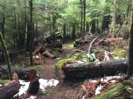 Downed trees littered the trail at the start