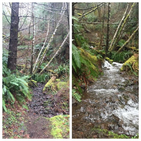 Cummins Creek Trail on Jan. 23, 2016, (left) and on Feb. 14. A little rain turns the trail into a shallow creek.